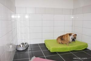 koirahotelli5